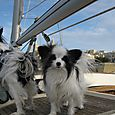 Bailey Alexander's foto's of Colette and Godot aboard MADI