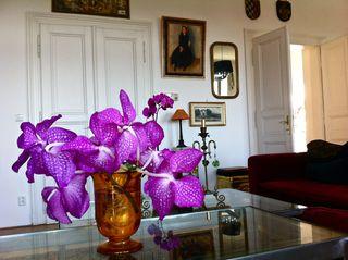 Bailey Alexander's fotos of flowers
